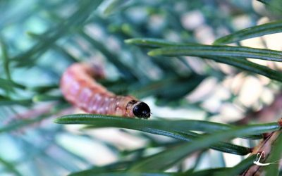 Check your trees for hungry critters
